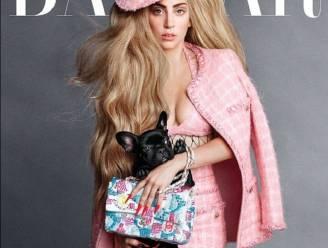 Hond van Lady Gaga schopt het tot covermodel