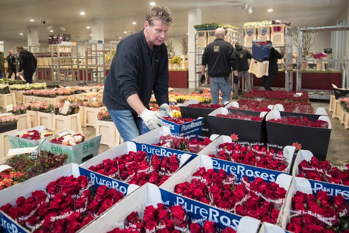 Een medewerker van bloemenveiling Plantion in Ede is druk in de weer met het klaarmaken van een bestelling rode rozen voor Valentijnsdag.