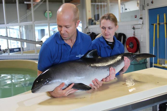 Tot eind 2016 werden bruinvissen opgelapt in het opvangcentrum in Harderwijk.