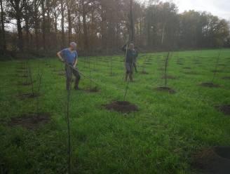 Hooggoedbos krijgt er zes hectare bomen bij (en volgend jaar nog eens drie hectare)