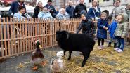 Jaarmarkt verzamelt runderen en kleinvee op Grote Markt
