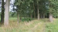 Vermiste dementerende man dood teruggevonden in bos aan Kindekensstraat: Kwaad opzet wordt uitgesloten