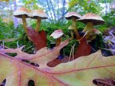 Dit zijn de mooie herfstfoto's die jullie instuurden
