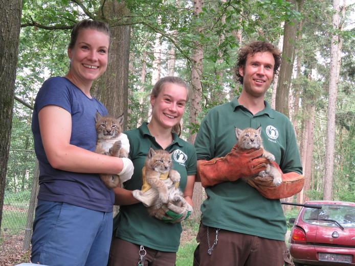 Dierverzorger Patrick Rutjes (rechts) toont de drie jonge lynxen met een collega en de dierenarts.