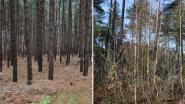 Naaldbossen worden uitgedund om plaats te maken voor loofbomen (en meer dieren en planten)