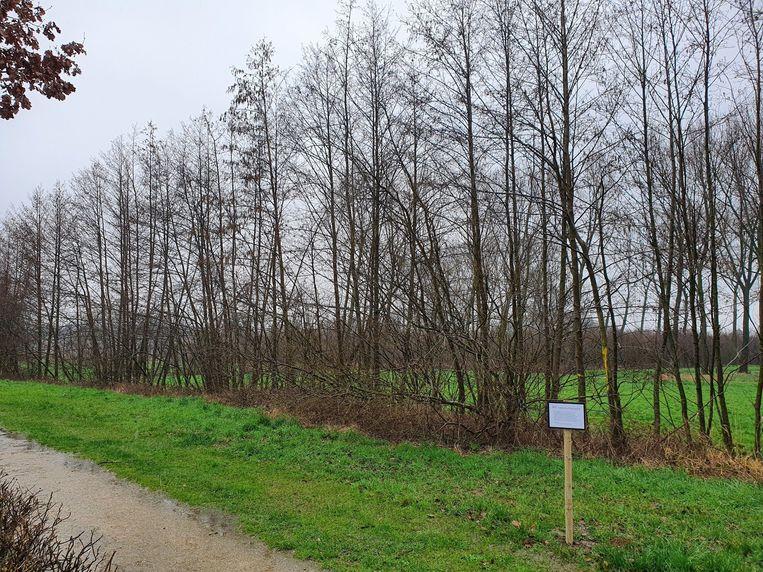 De bomen en struiken zullen tot 10 cm boven de grond worden afgezaagd.