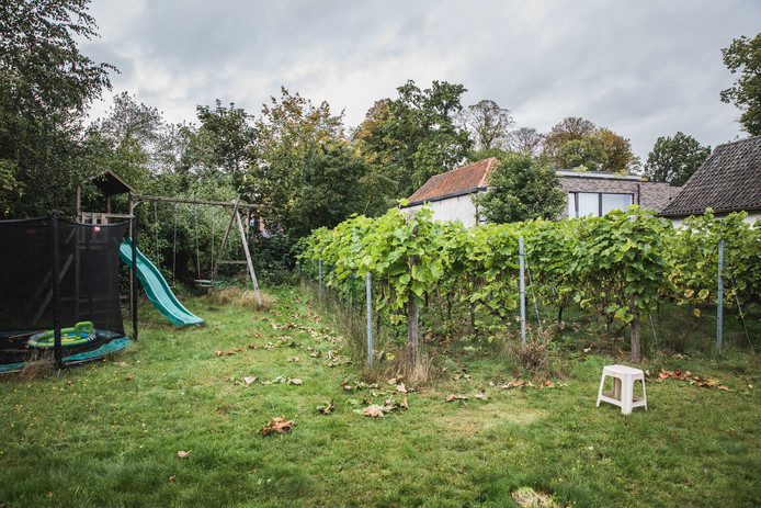 Een wijngaard in de achtertuin