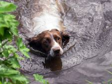 """Il drogue son chien, le ligote et le jette dans le canal: """"Il perdait trop de poils"""""""
