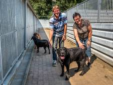 Duizenden annuleringen dierenpensions: 'Nog geen faillissementen, maar bij tweede golf...'