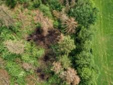 Wie stichtte drie keer brand in bosje bij Hulshorst? 'Dit is voor ons ook echt gissen'