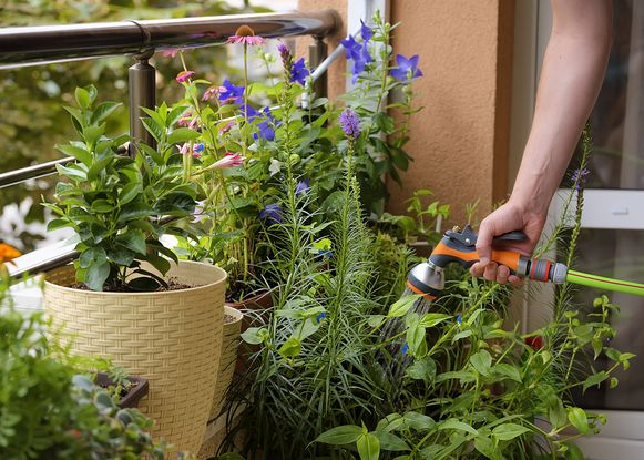 Heb je een terras waar het 's zomers flink heet kan worden, bijvoorbeeld in de stad, gevangen tussen muren, geef je kamerplanten 's avonds dan een frisse douche