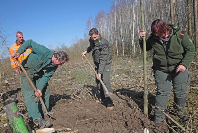 In het Spuibos worden deze week bijna 10.000 nieuwe bomen geplant.
