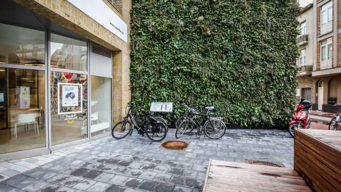 Nieuwe blikvanger in de Weststraat: verticale tuin met zestien verschillende planten