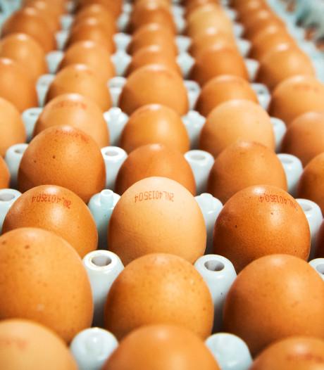 'Gewone' scharreleieren verkocht in dozen met Beter Leven-ster zorgt voor woede bij pluimveehouders
