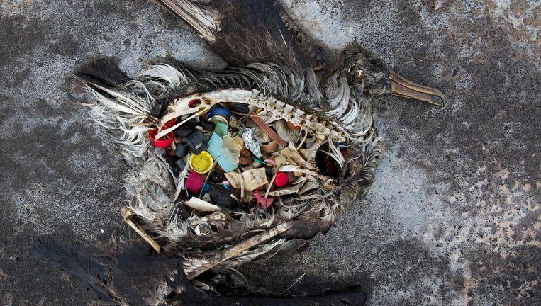 Afbeeldingsresultaat voor vogel plastic