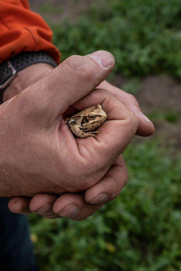 Boudewijn Tooren houdt een kikkertje in zijn hand. Op de Herenboerderij wordt geen enkel dier gedood.  Beeld Roos Pierson