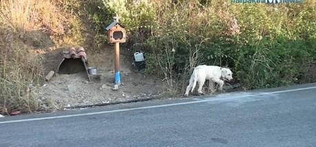 Rouwende hond waakt al anderhalf jaar op plaats waar baasje bij ongeval omkwam