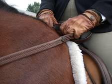 SP Sluis wil invoering van paardenbelasting
