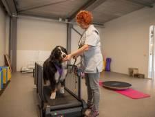 In Hoogeloon kan de hond onder begeleiding sporten