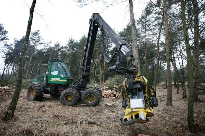 Bij wijze van natuurherstel worden bomen massaal gekapt om plaats te maken voor heide.