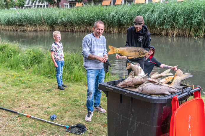 Het opruimen van de dode vissen.