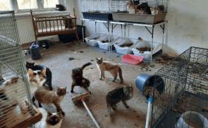 De Landelijke Inspectiedienst Dierenbescherming (LID) heeft 49 katten en 5 stinkdieren aangetroffen in een zwaar vervuilde woning in Nieuwkoop. De ontdekking werd vrijdag 28 februari gedaan naar aanleiding van een melding over een verwaarloosd hondje. Dit meldt de Dierenbescherming.