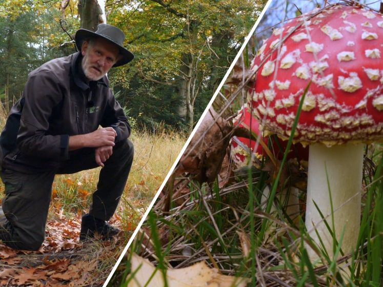 Het is beter om paddenstoelen te laten staan: 'Het bos is geen verlengstuk van de supermarkt'