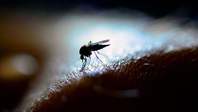 Un moustique pompant sans gêne aucune le sang de sa victime humaine.