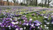 Daar is de lente, daar zijn de bloemen