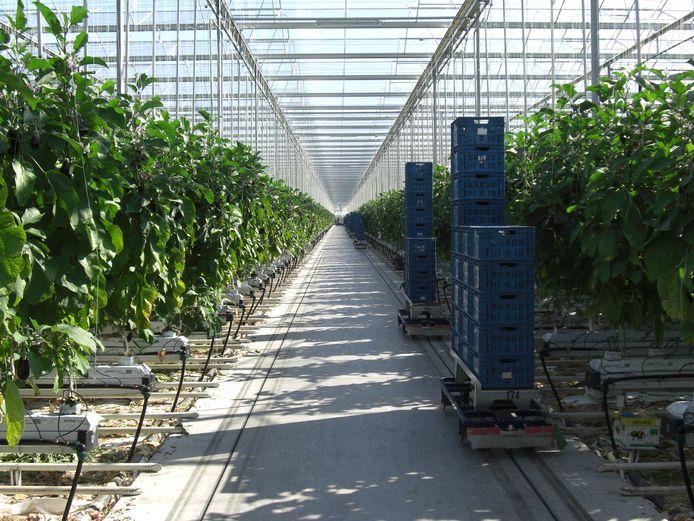 Er komt 7 hectare bij aan kassen bij Greenbrothers in Zevenbergen.