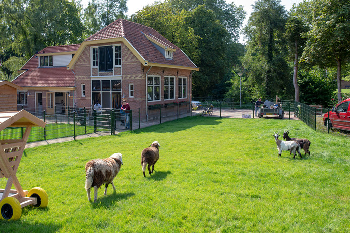 De eerste dieren zijn gearriveerd op de Stadsboerderij.