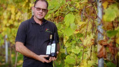 Tweede lichting Houtlandse wijn te koop