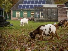 Kinderboerderij Kleine Meer in Valkenswaard krijgt toch subsidie van gemeente