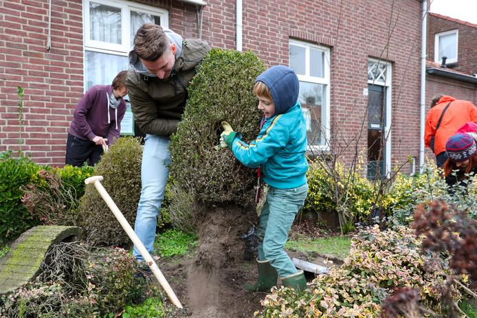 'Struikrovers' gaan op zoek naar planten in tuinen aan de Michiel de Ruyterstraat in Aalst van woningen die gesloopt gaan worden. Siebren Wittenberg (rechts) heeft samen met Bart Habraken een buxus uit de grond gehaald.