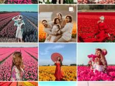 De fleurige foto's van de tulpentrappers