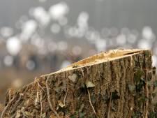 Herdenkingsplaatje voor verongelukte Johan Borgman uit Oude Pekela van boom gesloopt (voor de derde keer)