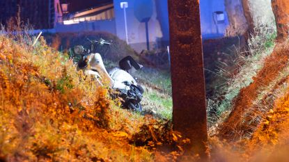 Waregemsesteenweg in Kruishoutem afgesloten na dodelijk ongeval met scooter