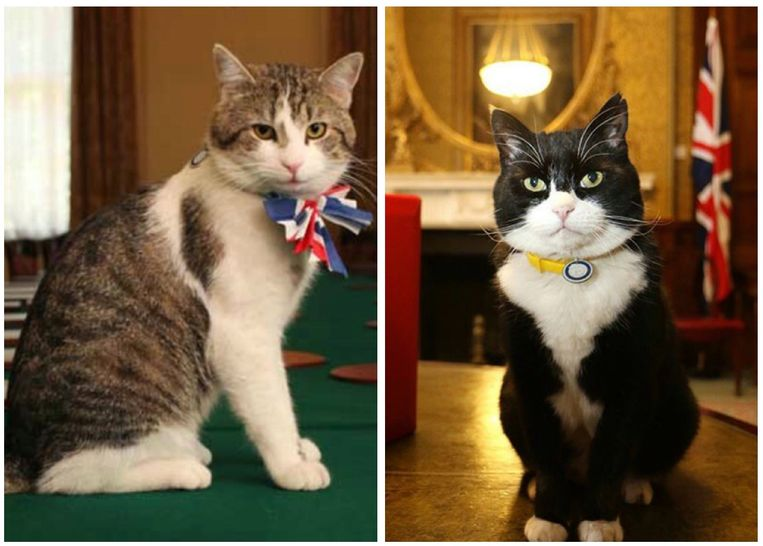 Larry en Palmerston, de 'official Mousers' van Downing Street nr. 10.