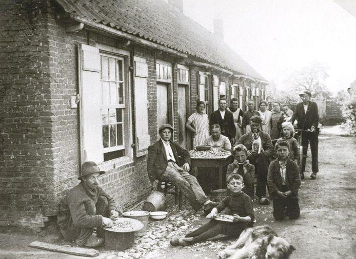 Foto uit 1926 uit de beeldbank van de Zevenbergse heemkundekring Willem van Strijen: uien schoonmaken in het Palingstraatje.