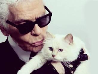 Choupette, de kat van Karl Lagerfeld, maakt comeback in reclamespotje