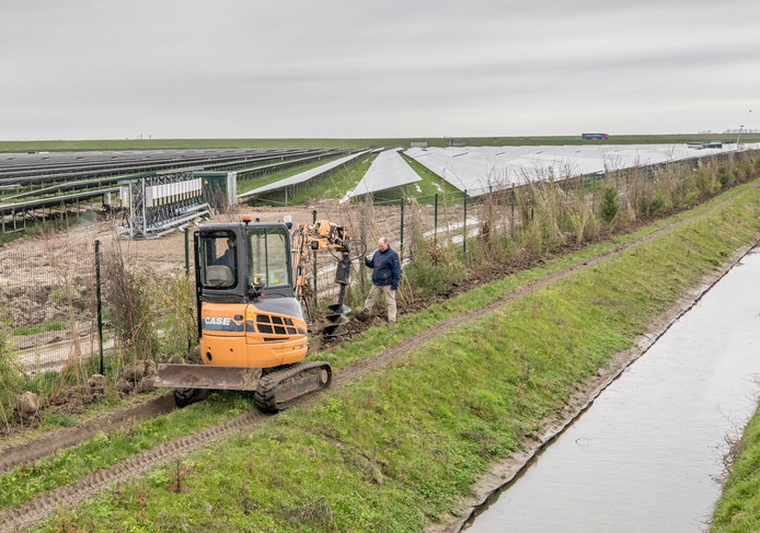 Aad Geluk, met Eneco eigenaar van het zonnepark aan de Ceresweg, plant de nieuw boompjes voor een nieuwe en hogere heg. Zijn vader Jaap zit in de graver.