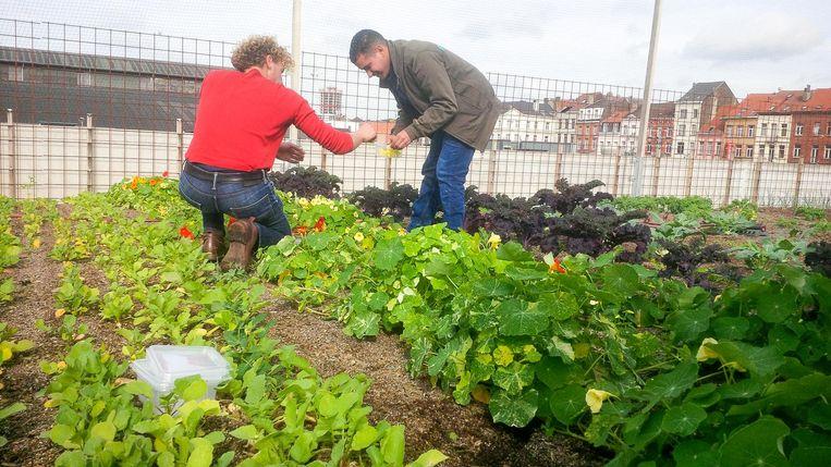 Er worden al volop groenten gekweekt op de nieuwe moestuin.