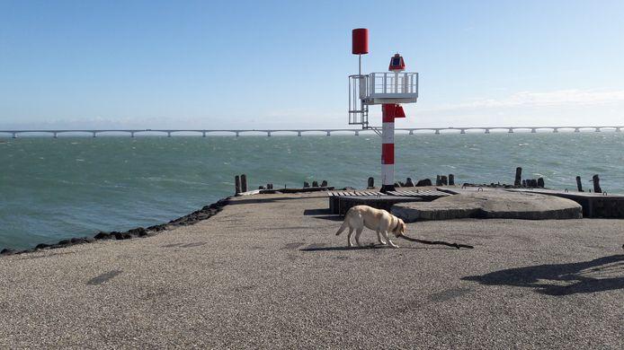 De munitiestort bevindt zich in de Oosterschelde, diep onder water.