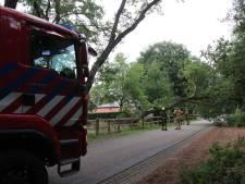 Boom valt over de weg in Markelo