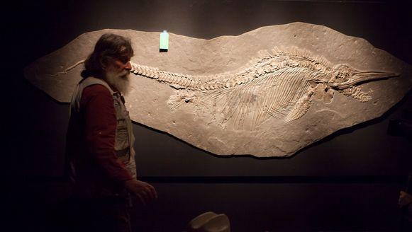 Foto ter illustratie. Een fossiel van een ichtyosauriër.