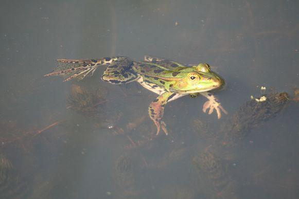 In Broek De Naeyer kan je zondag deelnemen aan een amfibieënwandeling.
