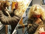 Duitsers vinden na half jaar poes Amy terug in Zwolle