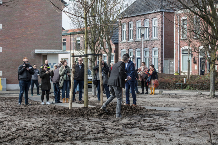 De eerste van tweehonderd bomen wordt aangeplant in de Welpenstraat
