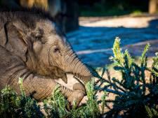Expeditieleider (35) betrokken bij honderden olifantendoden in Congo: 30 jaar dwangarbeid