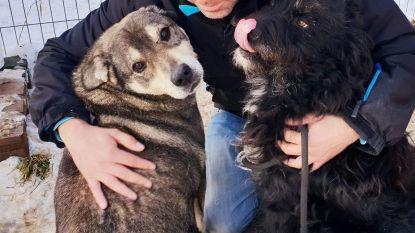 Brugse gezinnen geven Roemeense honden warm nest